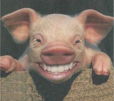influenza porcina humor
