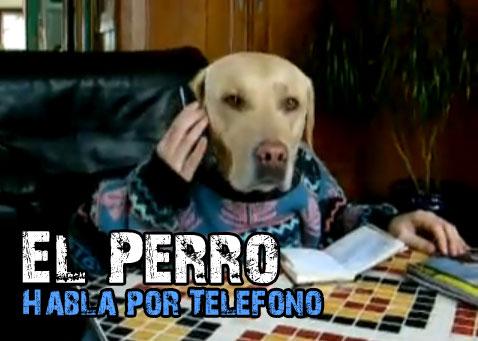 perro habla por telefono